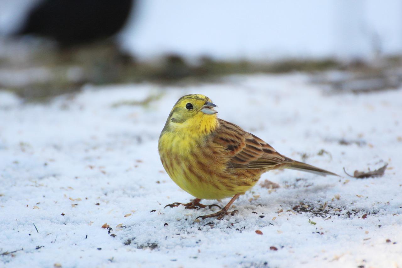 vögel am futterhaus  vogelfutter informationen  meise